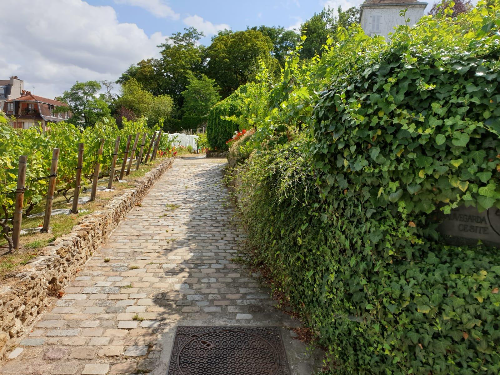 My-Montmartre-Tours-vignes-Montmartre